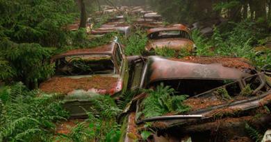 Ormana terkedilmiş 400 otomobilin hikayesi nedir?